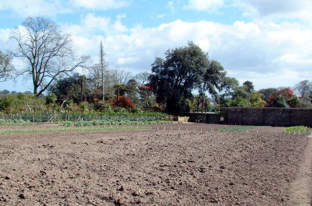 Heligan  vegetable plot