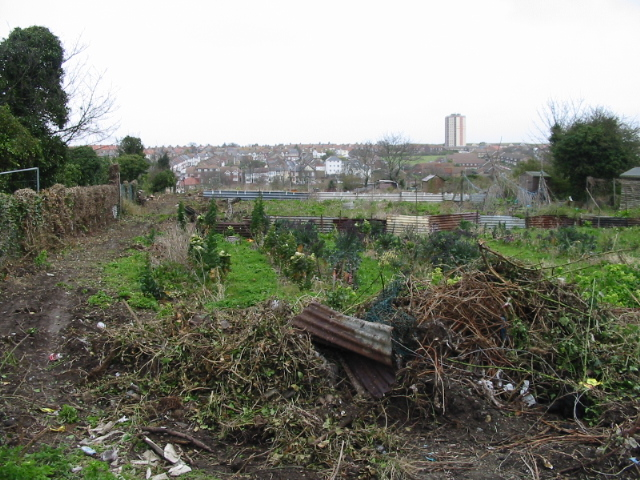 Winter tidying at the allotments