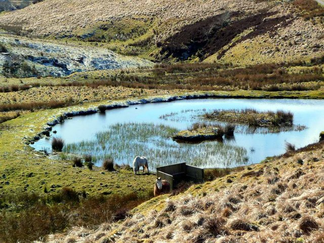 Horses by the lochan