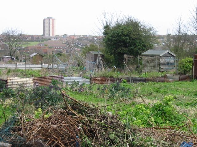 Allotments on St Peter's Footpath