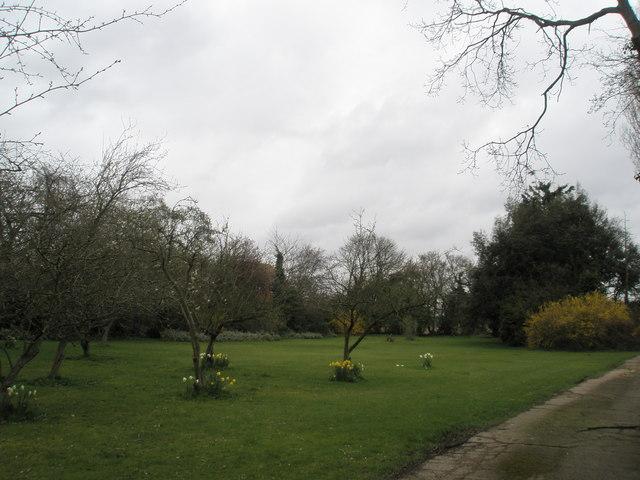 Pleasant area at Copsey's Nursery