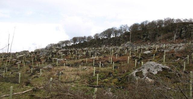 Rocky hillside revealed