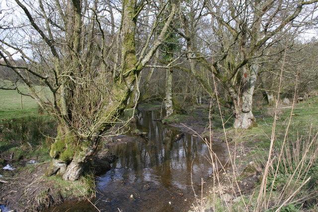 Stream Near Cwm-berwyn