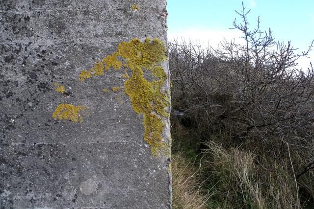 Lichen on the pillbox