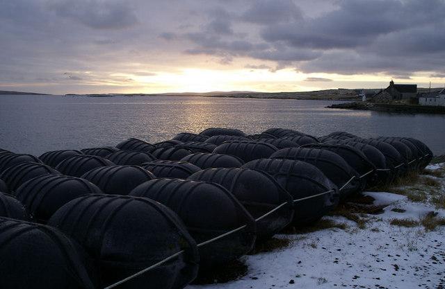 Mussel rafts at Uyeasound