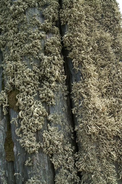 Lichen on the Clivocast standing stone