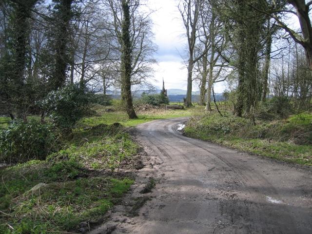 Woodland track at Gwysaney