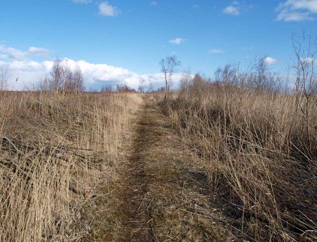 Footpath through Thorne Waste or Moors