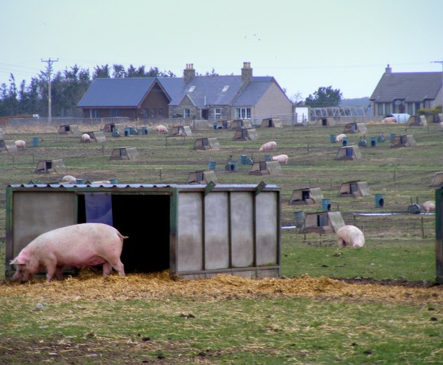 The Pig farm at Lower Auchenreath