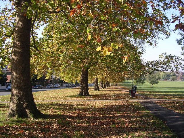 Autumn on Streatham Common