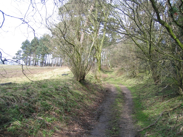 Hollow way at Gwysaney