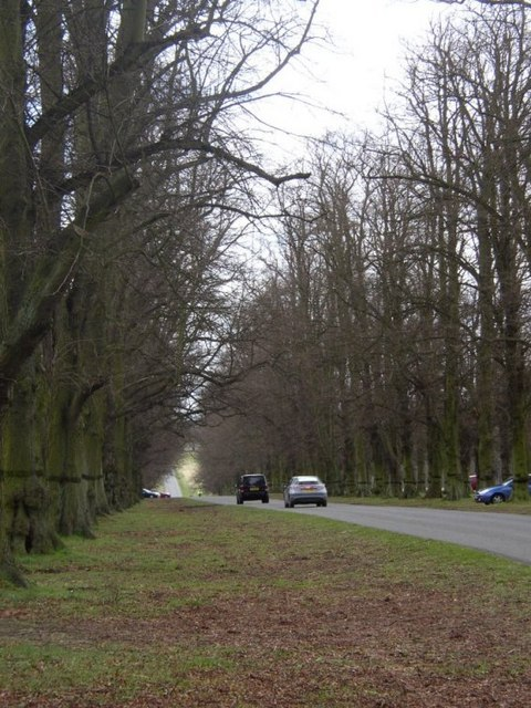 Avenue in Clumber Park