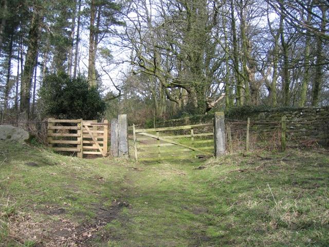 Woodland gateway at Gwysaney