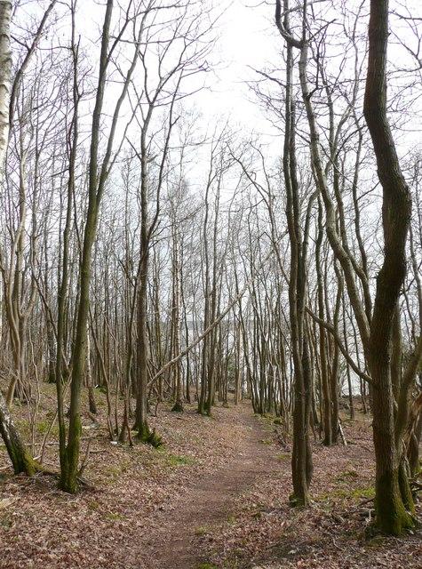 Footpath, Arnside Park, Arnside