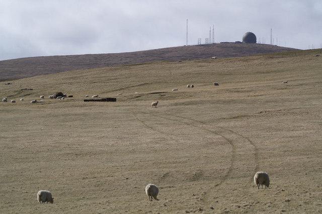 Poor grazing