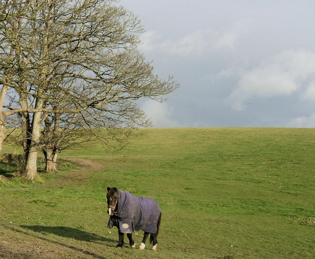 Pantomime Horse at Tarring Neville, East Sussex