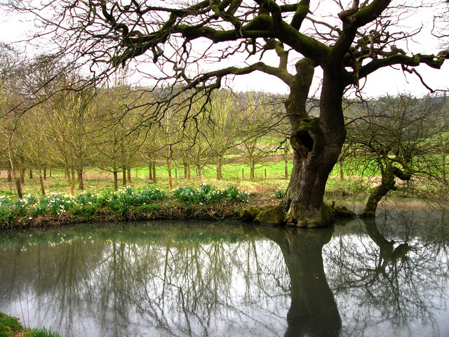 Pond near Bepton Church