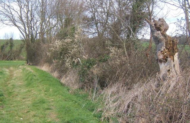 View along hedgerow