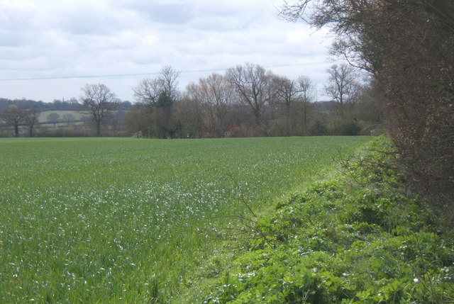 Field east of Fossetts Lane, looking SSE