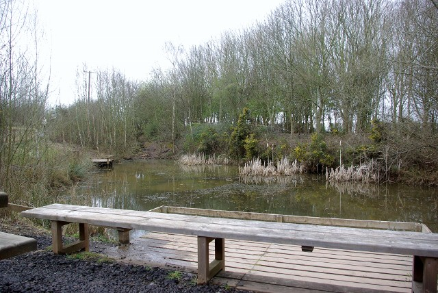 Pond used for pond dipping at Ryton Pools Country Park