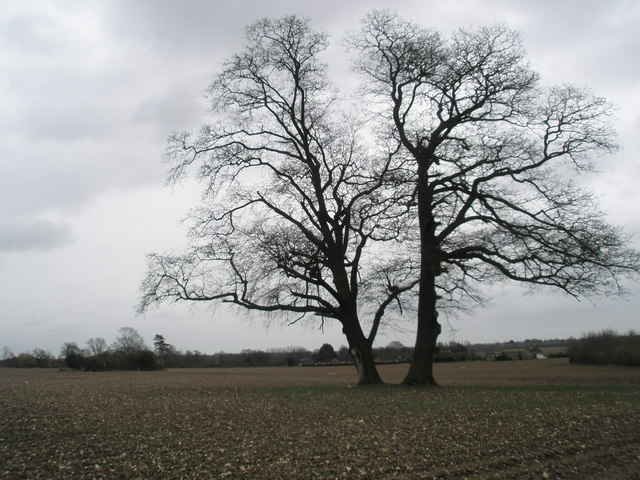 Tree in field at East Leigh Farm