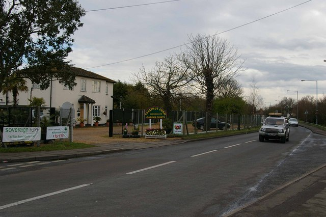 Chestnut Tree Farm