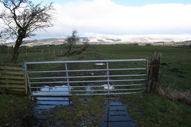Farm gate near Higher Lickhurst