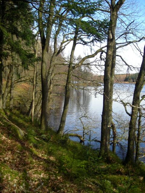 Loch Drunkie in Achray Forest