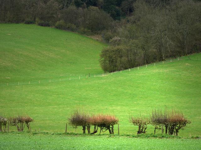 Downland near Didling