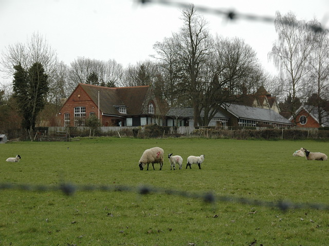 Ropley School across field of sheep