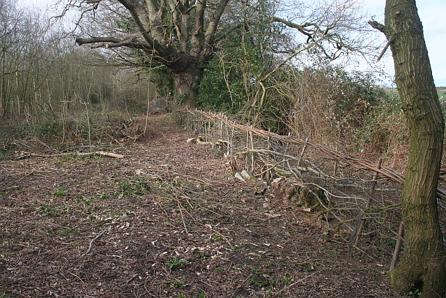 Hedge Laying, St. Wulstans Nature Reserve