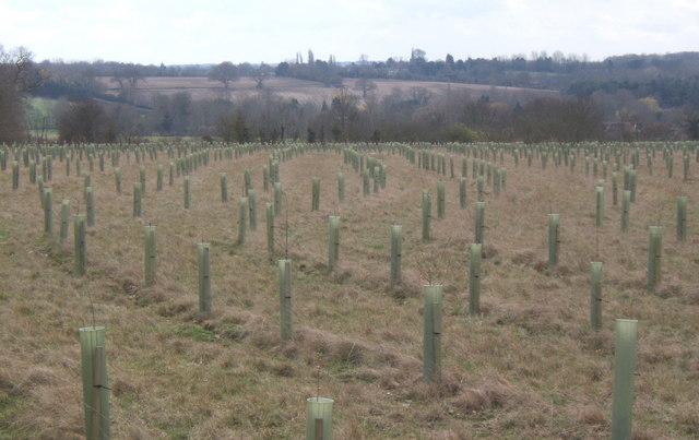 Tree planting on the Fordham Hall estate