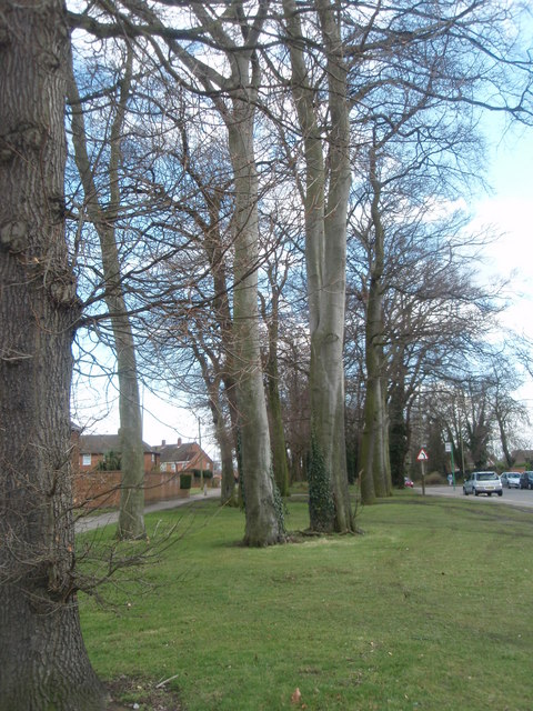 Mature Trees, Coleman Road.