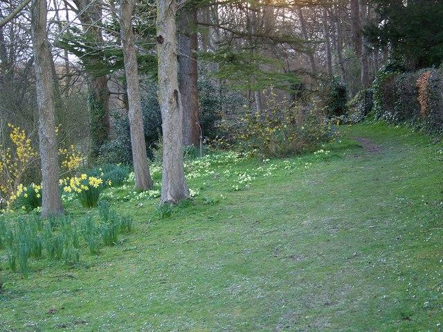 Spring flowers, Homington House