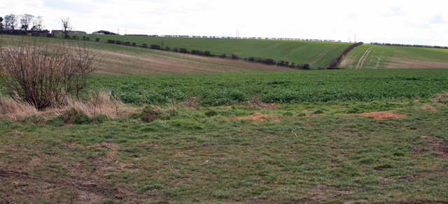 Field System between Barton Hill Farm and Barton Grange