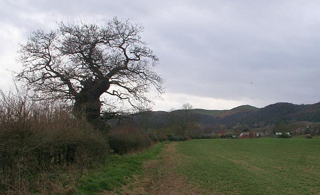 Fields of Woodend Farm
