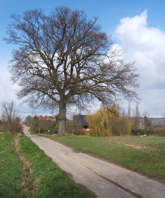 Tree by Penlan Hall Lane, looking towards Sutton's Farm