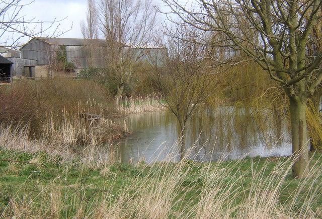 Corner of pond and farm buildings, Sutton's Farm