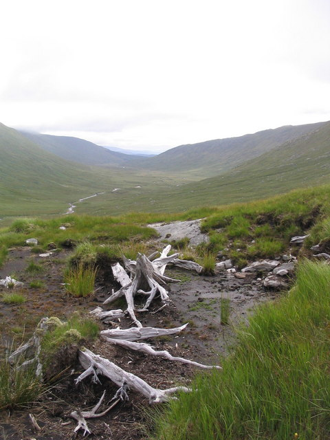 Bogwood in Glen Kingie