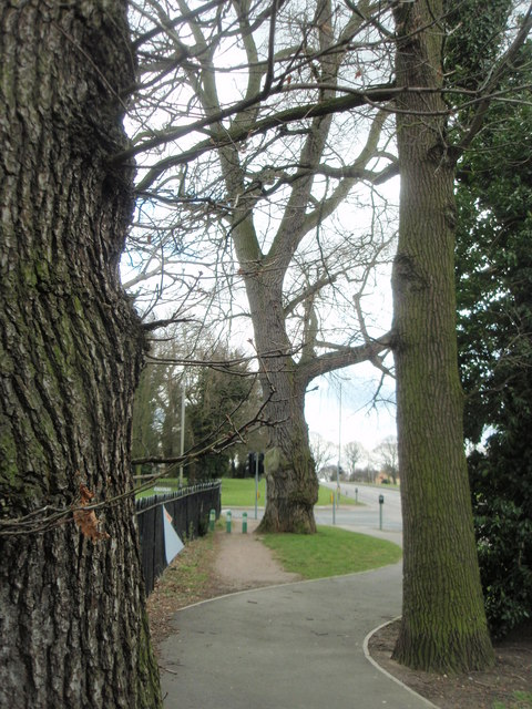 Trees on Goodwood Road, Leicester