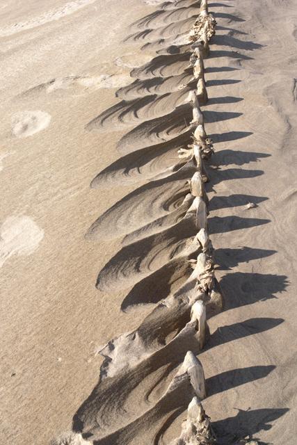 Buried fence (3)