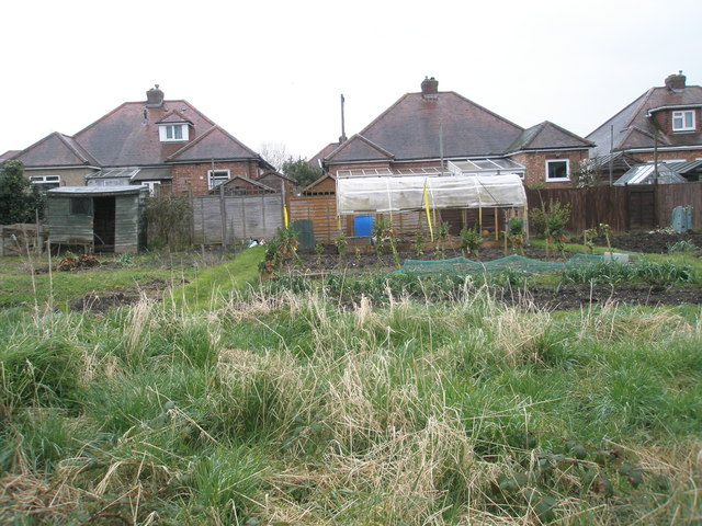 Allotments between Ingeledene Close and the Bidbury Schools footpath