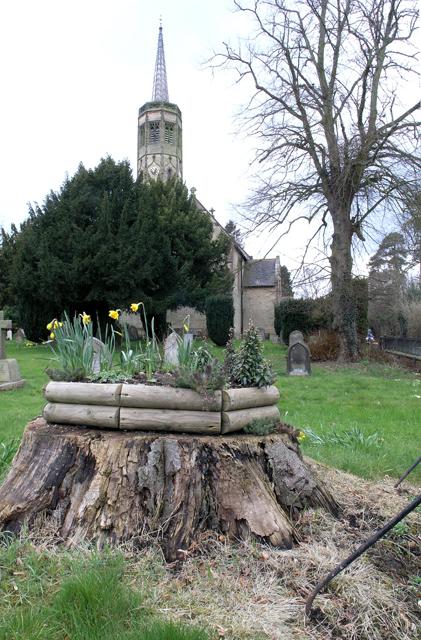 Daffodils on a tree stump