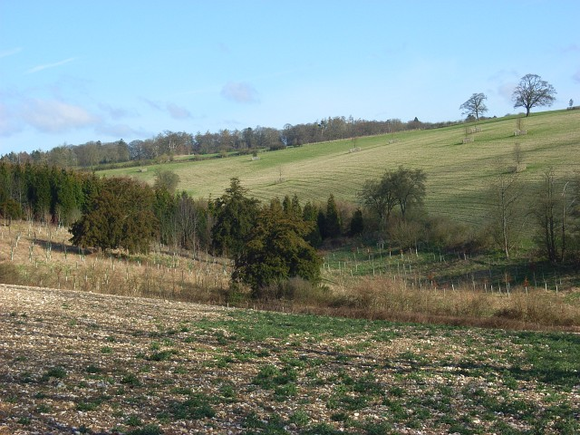 Farmland and woodland, Fawley