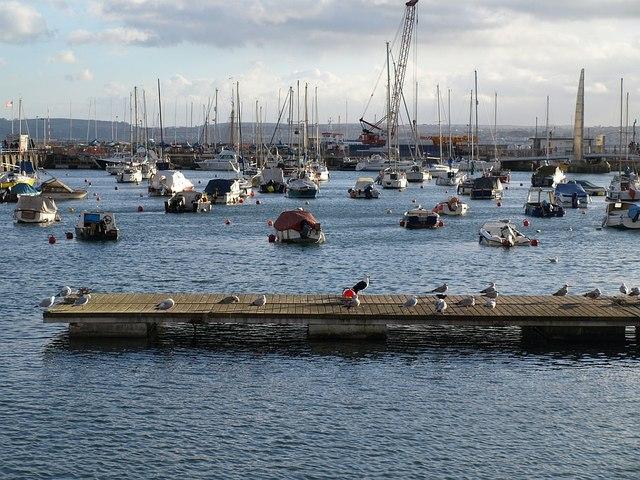 Pontoon, Torquay Harbour