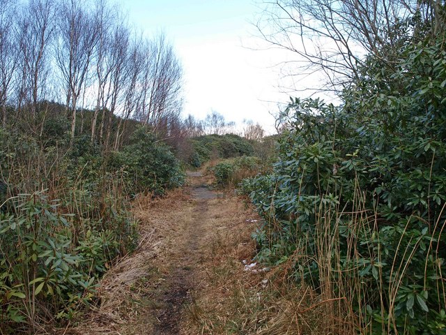 Footpath through the Rhododendrons