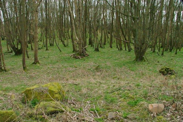 Shore Wood