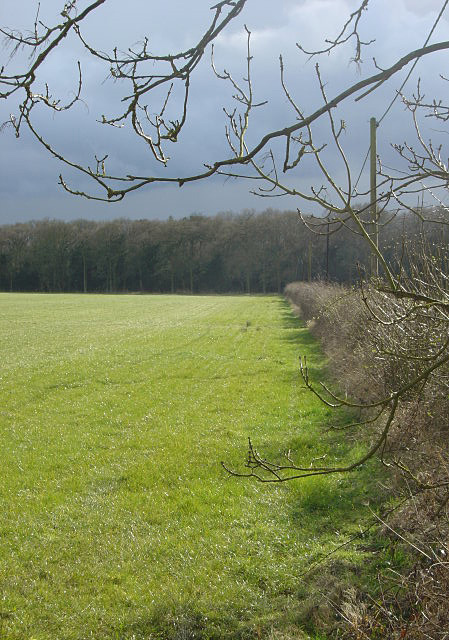 Hedgerow and woodland on West Leake Hills