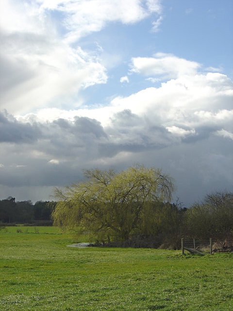 Weeping willow and storm sky
