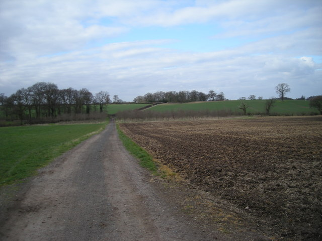 Track to 'The Whitemoor'